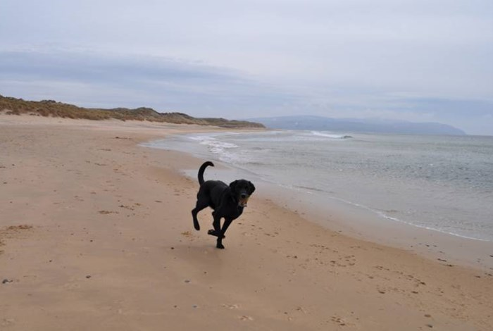 The best dog-friendly breaks in Argyll and the Isles
