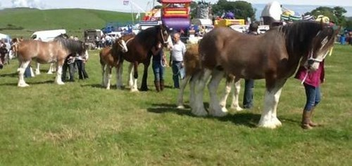 Kintyre Agricultural Show